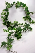 Silk Ivy Garlands 5' Miniature English Ivy Variegated