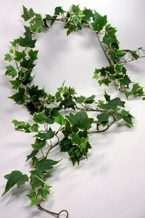 http://ep.yimg.com/ay/yhst-132146841436290/silk-ivy-garlands-5-miniature-english-ivy-variegated-2.jpg