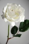 Silk Open Rose Spray 23 in Pkg of 12 - Cream - Clearance