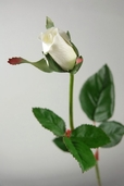 Single Rose Bud Spray 23in. - Cream - Box of 24 - Clearance