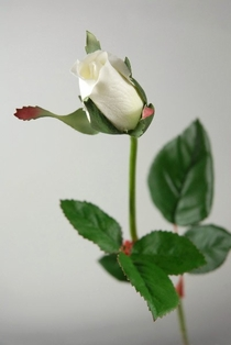 http://ep.yimg.com/ay/yhst-132146841436290/single-rose-bud-spray-23in-cream-box-of-24-clearance-2.jpg