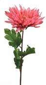 Spider Dahlia Spray 25in. 12 Pack - Pink Beauty