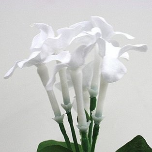 http://ep.yimg.com/ay/yhst-132146841436290/stephanotis-12-pack-bundle-white-2.jpg