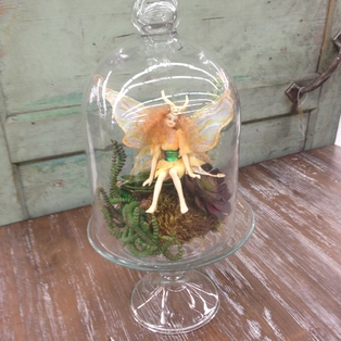 Succulent Fairy Dome