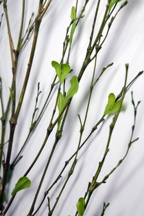 http://ep.yimg.com/ay/yhst-132146841436290/tall-artificial-bamboo-with-leaves-36-inch-pkg-of-1-2.jpg