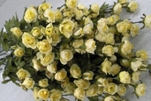 Victoria's Heart Rose Pkg of 12 - Yellow - Clearance