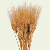 Wheat Bundle Natural Dried  2oz.