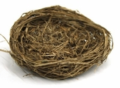 Wild Grass Bird Nest 3.25 in. Pkgs of 3