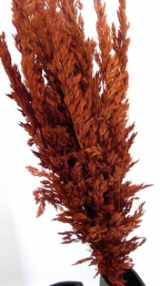 http://ep.yimg.com/ay/yhst-132146841436290/wild-oats-dried-burnt-oak-2.jpg