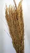 Wild Oats Dried - Natural