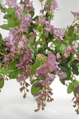 Wisteria Bush -31in - Purple - CLEARANCE