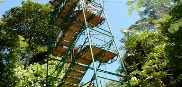 Canopy Tower