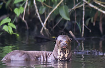 Amazing Amazon Wildlife