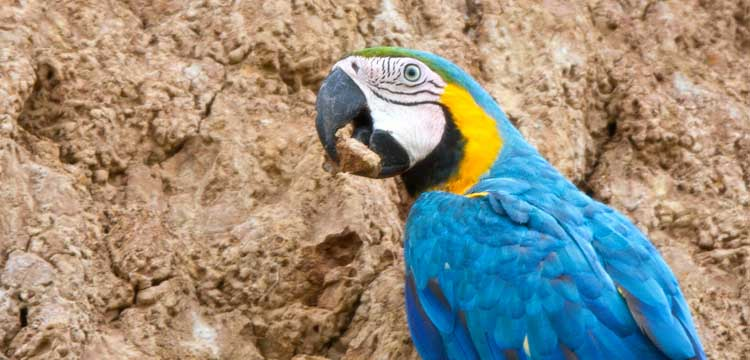 Macaw Project Lecture