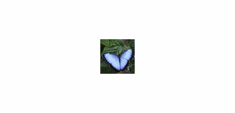 Refugio Amazonas- Butterfly Lovers - 4D/3N