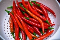 Cayenne Red Long Pepper - 100 Seeds
