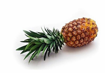 """Pineapple Plant - Ananas - Great Indoors/Out - 4"""" Pot"""