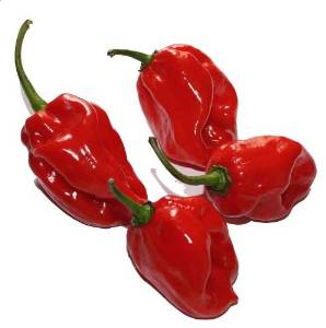 Red Habanero Pepper 15 Seeds - Extremely Hot