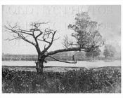 Ryders Pond cedar tree Gravesend 1899