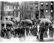 When the circus comes to town - Brooklyn Elephant Walk - 1890