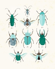 Beetle Study - Blue Canvas Wall Art