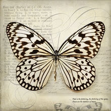 Butterfly Newsprint Canvas Wall Art