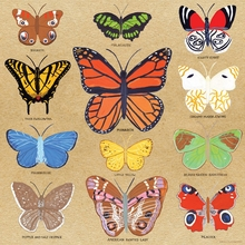 Butterfly Study Canvas Wall Art