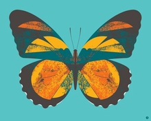 Forester Butterfly Poster Wall Decal