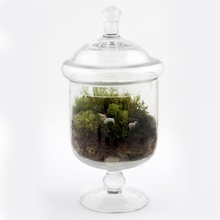 Grazy Days Readymade Terrarium