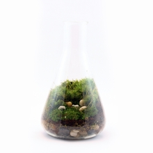 Hello Dolly Readymade Terrarium