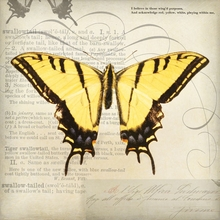 Monarch Newsprint Canvas Wall Art