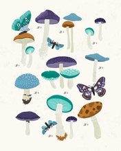 Mushroom Study - Blue Canvas Wall Art