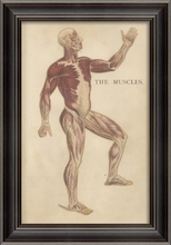 Physiology Muscles Framed Wall Art