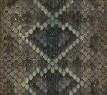 Rattlesnake Skin Canvas Wall Art