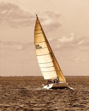 Sepia Tone Sailboat VI Wall Art