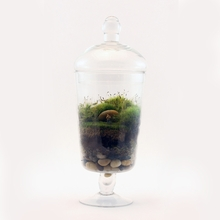 The Right Light Readymade Terrarium