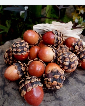 Acorn Decorations with Pinecone Tops