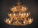 Whitetail Fourty Two Antler Chandelier