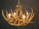 Whitetail Six Antler Chandelier