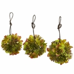 "5"" Mixed Succulent Hanging Balls, Set of 3"