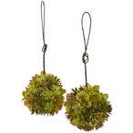 "7"" Mixed Succulent Hanging Spheres, Set of 2"
