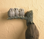 Screech Owlet Birds Sculpted Hand Painted Single Wall Hooks, Set of 2