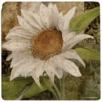 White Sunflower Travertine Stone Trivets, Set of 2