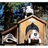 ANIMALS - Pet House Cat on top of Mailbox Woodendippity Mailbox with Newspaper Holder