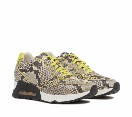 Ash Love Womens  Sneaker  Roccia & Acid Yellow 350092 (257)