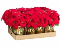 "1 Dozen - 15"" Artificial Poinsettias Plant in Gold Wrapped Pot (shown in Red)"