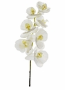 "1 dozen - 40"" Phalaenopsis Orchid Stems - High Quality"