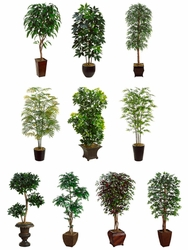 10 Artificial Assorted Tree Assortment All in Designer Conatiners