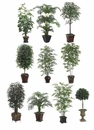 10 Artificial Assorted Tree Package  All in Designer Containers