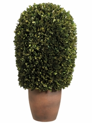 "11""Dx24""H Preserved Boxwood Ball Topiary in Pot"